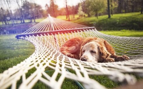 hammock dog
