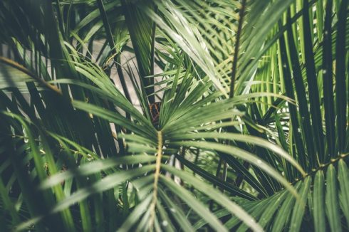 close-up-photo-of-palm-plant-1534172