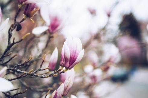 nature-flowers-plant-blur-2246823